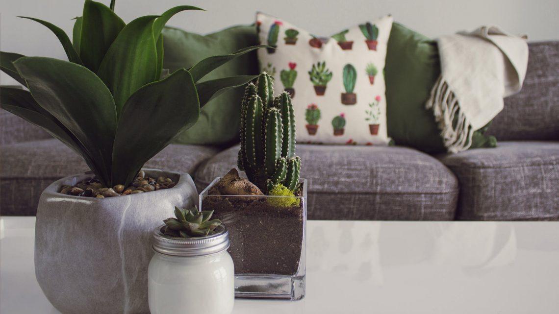 Kamerplanten in je huis: een gezonde keuze