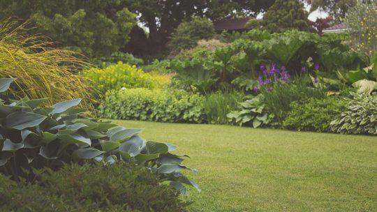 Tips voor een mooie tuininrichting