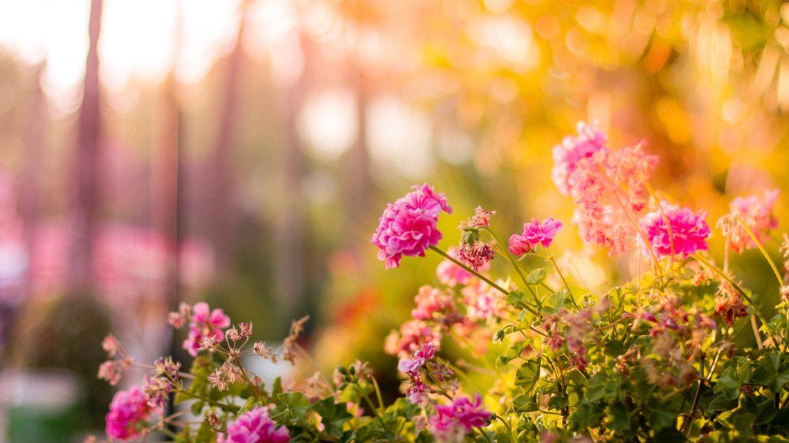 3 Simpele tips om je tuin klaar te maken voor de zomer!
